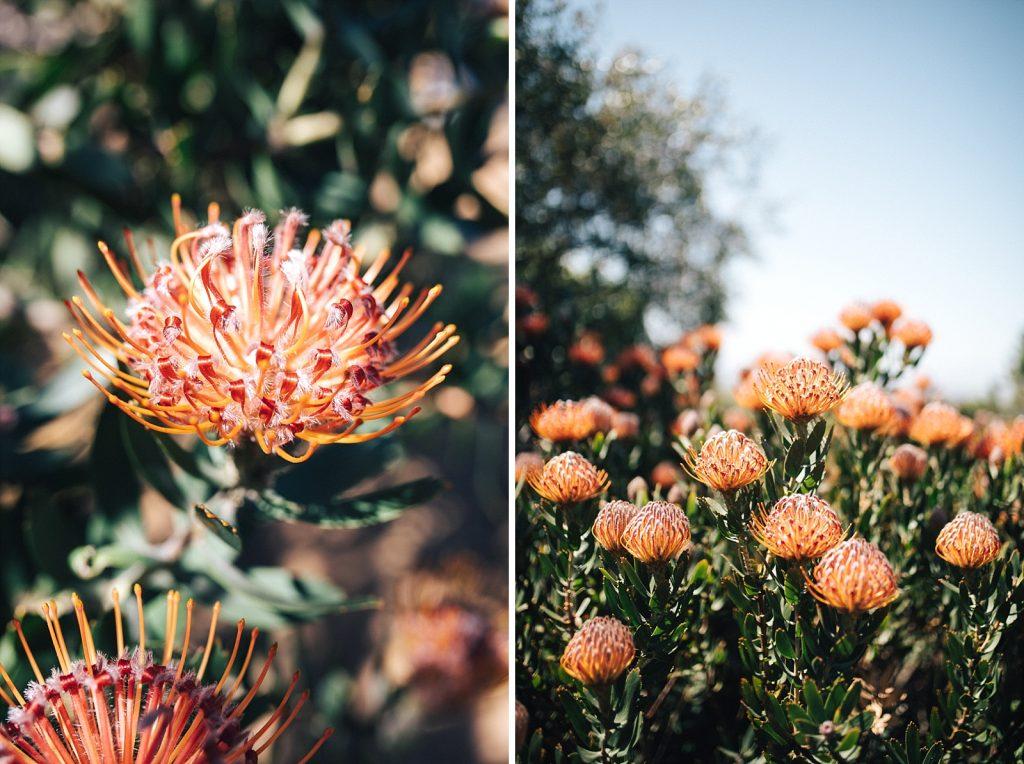 Kirstenbosch Cape Town