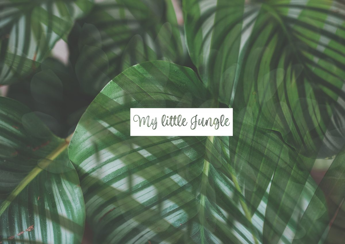 Plantes d'intérieur // My little jungle
