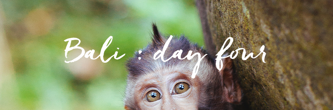 Bali // day 4 : Sacred monkey forest